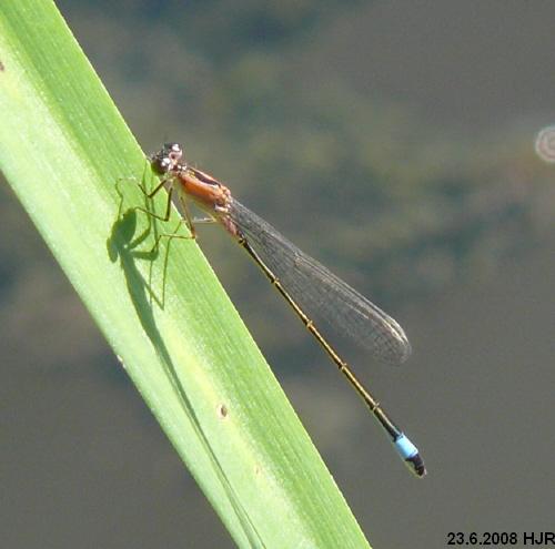 young male